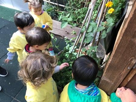Children plants trees vegetables fruit